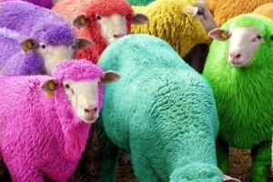 """L'industrie textile menacée par les moutons """"auto-tricots"""" génétiquement modifiés"""