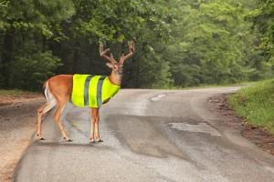 Un gilet de sécurité pour les animaux sauvages