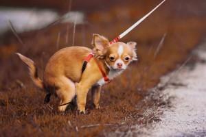 Science : un groupe de botanistes crée une pelouse pour les excréments de chiens