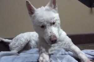 Ce magnifique chien était en bonne santé : mais que lui est-il arrivé (photos) ?