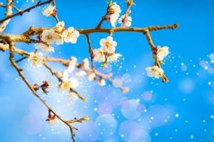 Interdiction des pollens : ceux qui souffrent d'allergies vont pouvoir respirer !