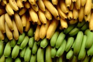 La nouvelle banane Monsanto vous permet de maigrir tout en blanchissant vos dents