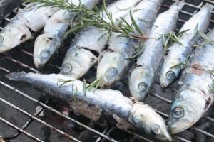 Bassin d'Arcachon : un homme grièvement blessé par des sardines
