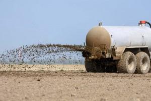Scandale sanitaire : des agriculteurs répandraient des excréments d'animaux sur leurs champs