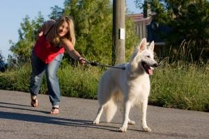 Sadisme : elle martyrisait  son chien depuis plusieurs années !