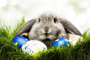 Lapin ou lièvre qui pond des œufs ? Christine Boutin exige de connaître le sexe de l'animal
