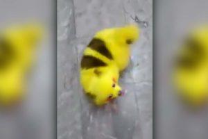 Le maître du chien ressemblant à Pikachu répond à ses détracteurs avec une vidéo choc explicative