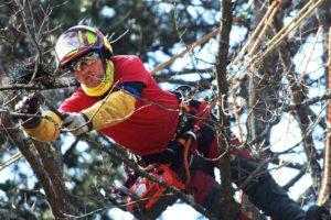 Bravoure : des pompiers sauvent de jeunes oiseaux coincés dans un arbre
