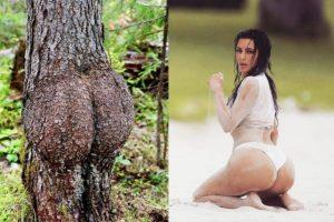 L'arbre généalogique des Kardashian a été découvert par des bucherons