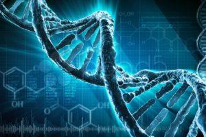 Science / évolution : voici à quoi nous allons ressembler d'ici 200 ans