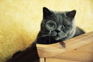 4 signes qui laissent à penser que votre chat envisage de partir vivre avec quelqu'un d'autre